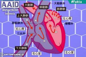 Riview Hataraku Saibo Eps 8 Memahami Peredaran Darah Yang Ada Didalam Tubuh